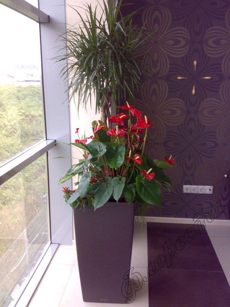 Flower shops floresta indoor gardening for Indoor gardening flowers